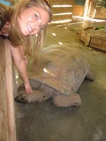 Kristin petting a giant turtle
