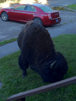 Excuse me Mr. Buffalo